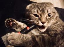 与刷子的猫 草丛 库存照片