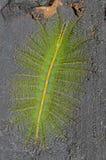与刺的一只爬行的大绿色昆虫 库存图片
