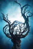 与刺的神秘的黑暗的树在蓝色雾 免版税库存照片