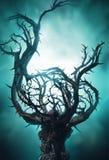 与刺的神秘的黑暗的树在绿色雾 免版税库存图片