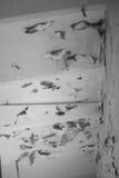 与削皮油漆的一块天花板 免版税库存照片