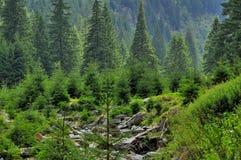 与前面的杉树的美好的山风景 图库摄影