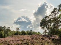 与剧烈的云彩的五颜六色的欧石南丛生的荒野 免版税库存图片