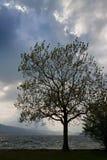 与剧烈的光的树剪影 库存照片