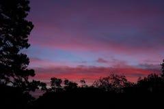 与剧烈的天空的剪影树在黎明 苹果覆盖花横向草甸本质星期日结构树 库存图片