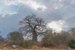 与剧烈的天空的非洲猴面包树 安格斯 免版税图库摄影