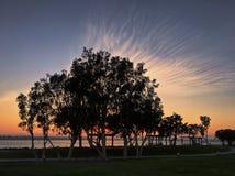 与剪影树的不可思议的日落在都市公园 免版税库存图片