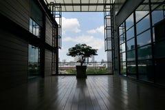 与剪影树的透视空的空间在罐 免版税库存照片