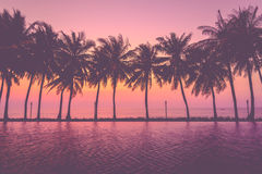 与剪影棕榈树的日落 免版税库存照片