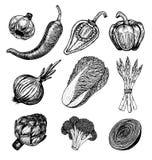 与剪影的集合手拉的元素称呼新鲜蔬菜 不同的胡椒 皇族释放例证