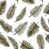 与剪影羽毛的无缝的样式 免版税库存图片