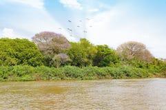 与劈裂、鸟和绿色植被的潘塔纳尔湿地风景 免版税库存照片