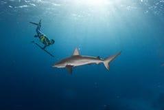 与加拉帕戈斯鲨鱼的自由潜水 免版税图库摄影