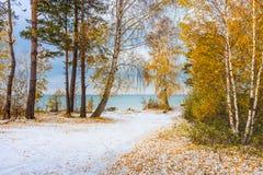 与加拿大桦和雪的秋天风景 西伯利亚, coas 免版税库存图片