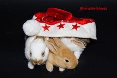 与动物的圣诞快乐卡片 库存照片