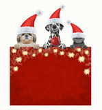 与动物的圣诞节时间 图库摄影