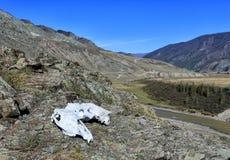 与动物的头骨的山风景 免版税库存照片