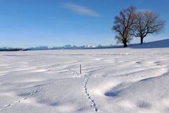 与动物轨道的美好的多雪的风景在冬天在Allgu阿尔卑斯的巴伐利亚 免版税库存照片