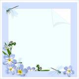 与勿忘草和蜻蜓的框架 免版税库存图片