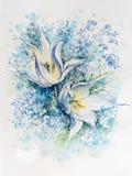 与勿忘草的两白色郁金香在白色背景 免版税图库摄影
