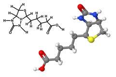 与化学式的维生素B7分子 库存例证