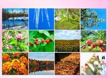 与十二的空白上色了自然的图象日历的 免版税库存图片