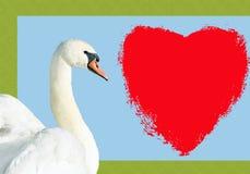 与华伦泰心脏的美丽的消息的天鹅和空间 免版税库存图片