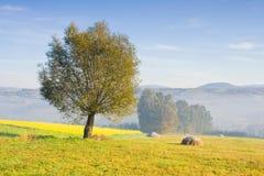 与单独树的风景在雾 免版税库存照片