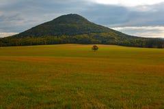 与单粒宝石树的小山在草甸 美好的横向 在小山的晚上与村庄,捷克国家公园Ceske Svycarsko, Bohe 免版税库存图片