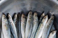 与卖在东南亚的鱼的背景销售第4部分 免版税图库摄影