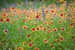与印地安毯子的野花领域 免版税库存图片