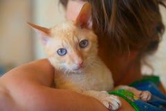 与卷发的美丽的猫 免版税图库摄影
