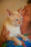 与卷发的美丽的猫 库存图片