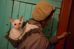 与卷发的美丽的猫 免版税库存照片