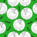 与卷曲绵羊的无缝的样式在绿色 图库摄影