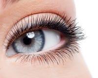 与卷毛长的假睫毛的秀丽女性眼睛 图库摄影