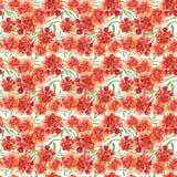与原始的红色万寿菊Patula, Tagetes的花卉样式 库存图片