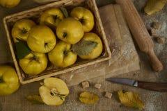 与厨具的很多苹果柑橘,为柑橘p做准备 库存照片