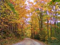 与参天的橙色秋叶树的BACKROAD 图库摄影
