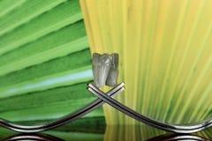 与叉子和大象的概念在幻想背景III 免版税库存图片