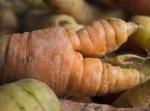 与双技巧的祖传遗物红萝卜 免版税库存照片