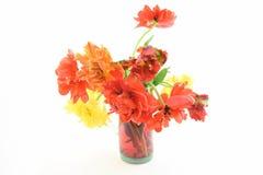 与双重绽放郁金香的五颜六色的静物画 免版税库存图片