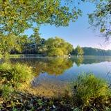 与反射在湖的结构树的横向 免版税库存图片