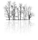 与反射的光秃的树 免版税库存图片