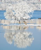 与反射的冬天风景在水中 库存图片