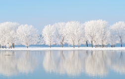 与反射的冬天风景在水中