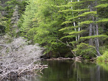 与反射的小河 库存照片