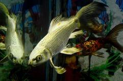 与反射的异乎寻常的银鱼 库存图片