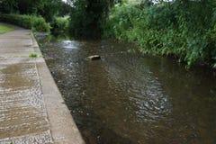 与反射的流动的小河从边缘 库存照片