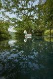 与反射的热带游泳池 库存图片